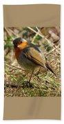 Robin In Hedgerow 3 Beach Towel
