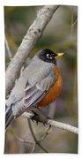 Robin In Tree 2 Beach Towel
