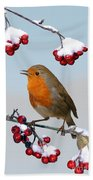 Robin On Winter Cotoneaster Beach Towel