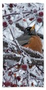 Robin Perched In Crabapple Tree Beach Towel