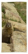 Rock Critter Beach Towel