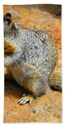 Rock Squirrel Beach Towel