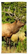 Rocky Mountain Elk Beach Towel