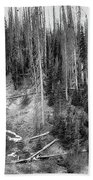 Rocky Mountain High Elevation Forest Large Panorama Beach Sheet