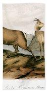 Rocky Mountain Sheep, 1846 Beach Towel