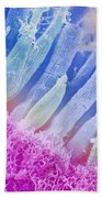 Rods And Cones In The Eye Beach Towel