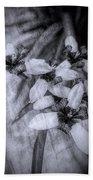 Romantic Island Iris In Black And White Beach Towel