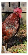 Rooster And Friend Beach Towel