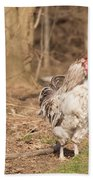 Rooster In The Woods. Beach Towel
