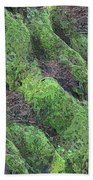 Roots Of The Ages Beach Towel by Tim Allen