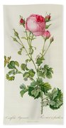 Rosa Centifolia Bipinnata Beach Towel