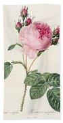 Rosa Centifolia Beach Towel
