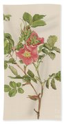 Rosa Cinnamomea The Cinnamon Rose Beach Towel