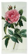 Rosa Gallica Regalis Beach Towel
