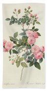 Rosa Multiflora Carnea Beach Towel