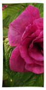 Rosa Rugosa Art Photo Beach Sheet