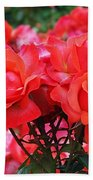 Rose Abundance Beach Towel by Rona Black