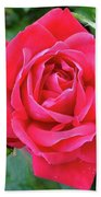 Rose And Buds - Double Knock Out Rose Beach Towel
