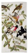 Rose Breasted Grosbeak Beach Towel by John James Audubon
