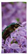 Rose Chafer On Lilac Beach Towel