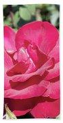 Rose In Bloom Beach Towel