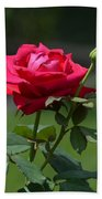 Rose Of Romance Beach Towel