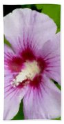 Rose Of Sharon Close Up Beach Towel