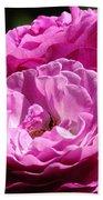 Rose Pink Purple Roses Flowers 1 Rose Garden Sunlit Flowers Baslee Troutman Beach Towel