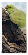Rose-ringed Parakeet 03 Beach Towel