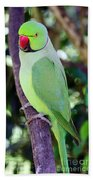 Rose-ringed Parakeet Beach Towel