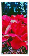 Roses At Mont Alto Beach Towel