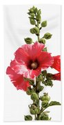 Roses Tremieres Beach Towel