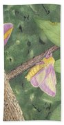 Rosy Maple Moth Gathering Beach Towel