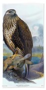 Rough Legged Buzzard Hawk Antique Bird Print The Birds Of Great Britain Beach Towel