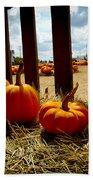 Row Of Pumpkins Sitting Beach Towel