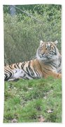 Royal Bengal Tiger Beach Towel