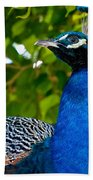 Royal Bird Beach Towel