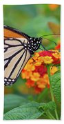 Royal Butterfly Beach Towel