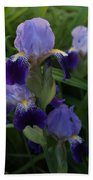 Royal Purple Iris's Beach Towel