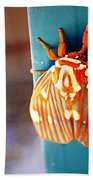 Royal Walnut Moth Beach Towel