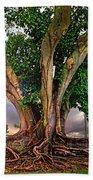 Rubber Tree Beach Towel