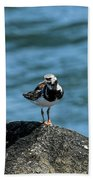 Ruddy Turnstone 2 Beach Towel