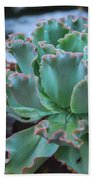 Echeveria Rosea  Beach Towel