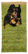 Run Dog Run Beach Towel