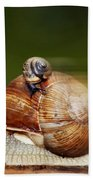 Runaway Snail Beach Towel