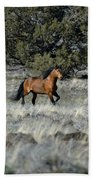 Running Bachelor Stallion Beach Towel