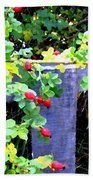 Rustic Fence And Wild Rosehips Beach Towel