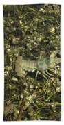 Rusty Crayfish At Night Beach Towel
