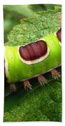 Saddleback Caterpillar Beach Towel