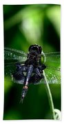 Saddlebag Dragonfly Beach Towel